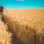 Profesjonalna działalność gospodarstw rolnych